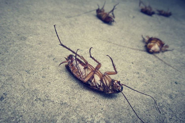 Απαλλάξτε το χώρο σας από κατσαρίδες, κάνοντας απολυμάνσεις