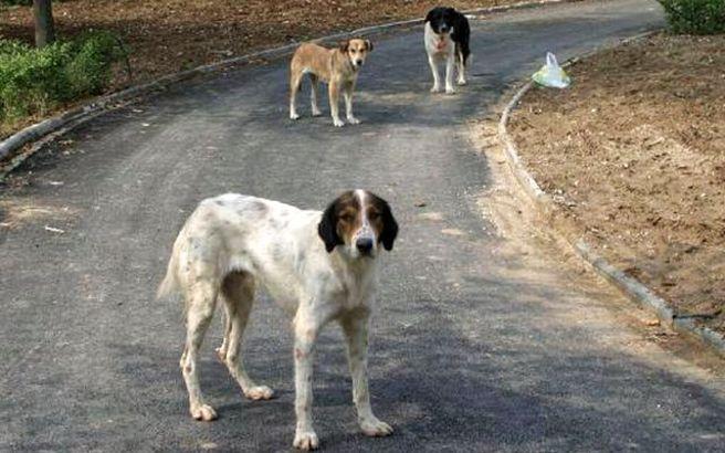 Πρόστιμο στη μοναδική κάτοικο χωριού της Χίου γιατί τα σκυλιά δεν είχαν τσιπ