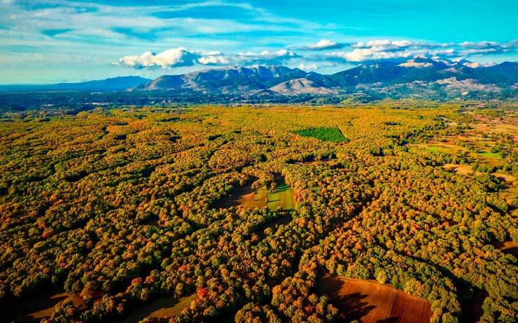 Ένα ελληνικό δάσος βγαλμένο από σελίδες παραμυθιού