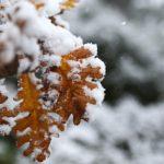 Κρύο, βροχές και χιονοπτώσεις μέχρι και την Κυριακή
