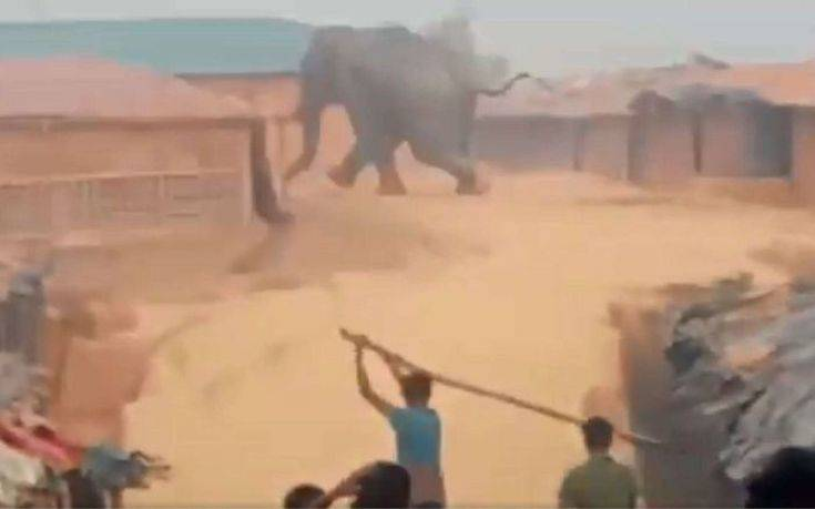 Ελέφαντας εισέβαλε σε καταυλισμό και ποδοπάτησε πρόσφυγες