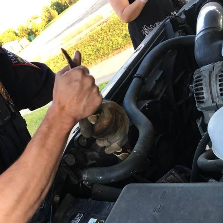 Κάτι δεν πήγαινε καλά με το αυτοκίνητο και η έκπληξη κρυβόταν κάτω από το καπό