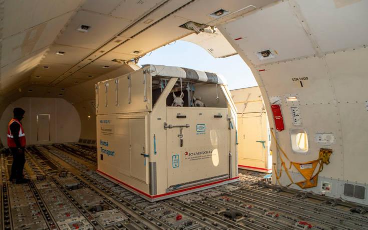 Emirates SkyCargo horses2 1
