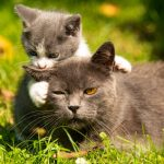 Απολύθηκαν από τον οίκο ανοχής που εργάζονταν γιατί… φρόντιζαν αδέσποτα γατάκια