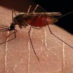Πρώτο κρούσμα ιού Δυτικού Νείλου στη ΜΕΘ του νοσοκομείου Λαμίας