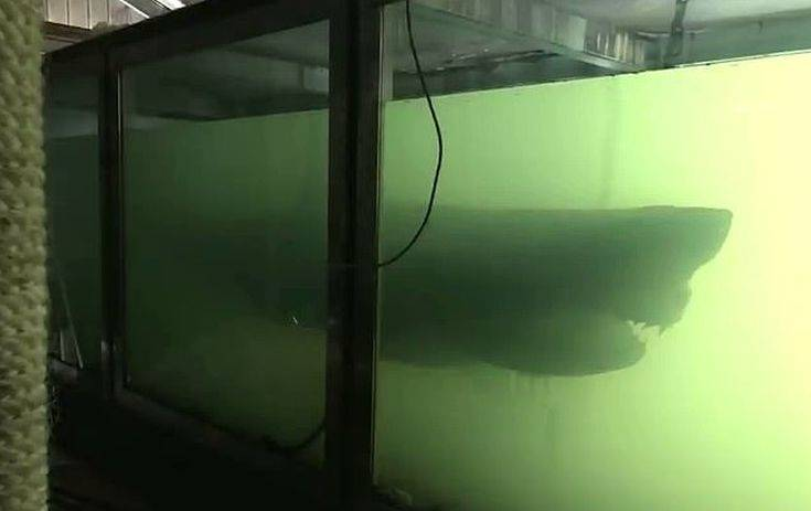 9746210 6713803 The carcass of a great white shark has been discovered floating  m 1 1550391585904