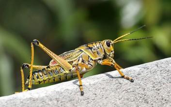 grasshopper 353x221 1