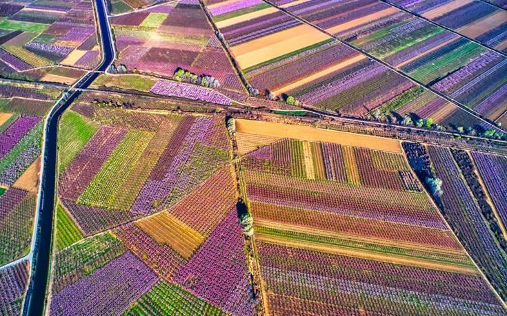 Πανέμορφες ανοιξιάτικες εικόνες στον κάμπο της Ημαθίας