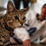 Γνωστή σεφ βρήκε τον χαμένο γάτο του Τζάστιν Μπίμπερ