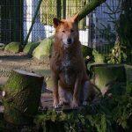 Κορονοϊός: Μακάβριο σχέδιο έκτακτης ανάγκης σε ζωολογικό κήπο της Γερμανίας