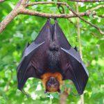 Κορονοϊός: Έκκληση ρώσου βιολόγου να απαγορευθούν οι πωλήσεις νυχτερίδων στη χώρα