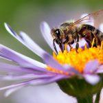 Ευεργετική η καραντίνα στη Ρώμη για τις… μέλισσες