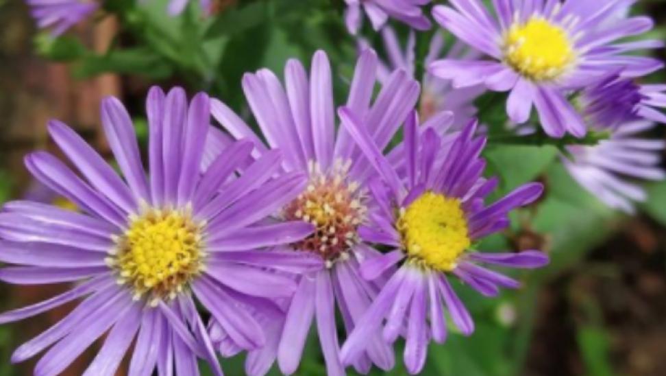 «Μυστήριο» με φωτογραφία ενός μωβ λουλουδιού στο διαδίκτυο – Το συμπέρασμα ερευνητών